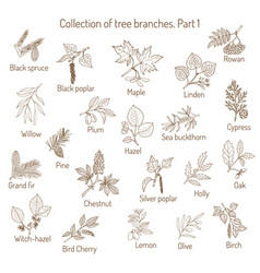 set of different tree branche vector image