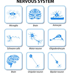 icon nervous system vector image