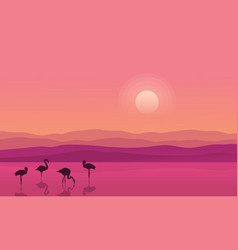 At sunrise lake scene with flamingo silhouettes vector