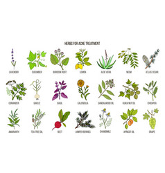 Best herbs for acne treatment vector