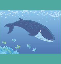 blue whale swimming with small fishes vector image