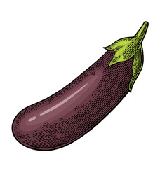 Eggplant color vintage engraved vector