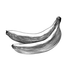 hand drawn sketch of banana in black isolated on vector image