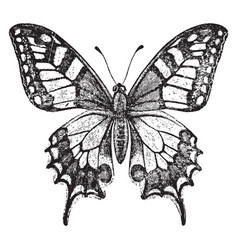 Old world swallowtail butterfly vintage vector