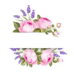 single rose card vector image