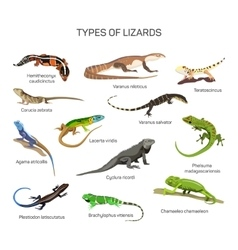 Lizards set in flat style design Different vector image vector image