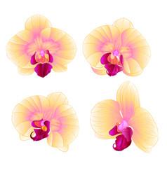 Yellow orchid phalaenopsis beautiful flower vector