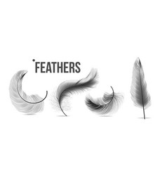 black feathers set different falling vector image