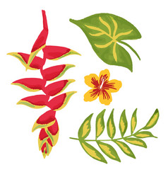 heliconia flower hibiscus tropical jungle leaves vector image