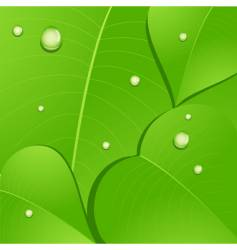 leaves and water droplets vector image
