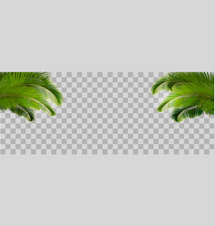 tropical palm leaves on transparent background vector image
