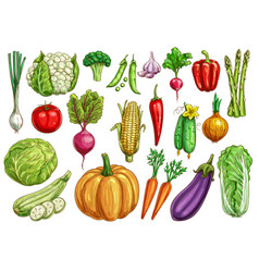 Vegetables isolated sketch set with fresh veggies vector