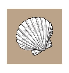 white saltwater scallop sea shell isolated sketch vector image
