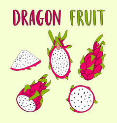 Whole and sliced dragon fruit isolated on light vector