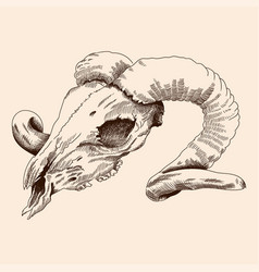 aries skull is old vector image