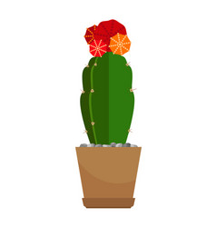 cactus with red flower in pot vector image