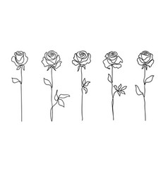 rose flower set continuous drawing line art vector image
