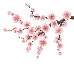 Spreading branch of pink cherry blossom EPS 10 vector image