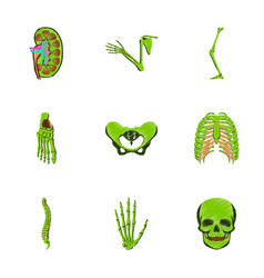 assembly of flat shading style icon human bones vector image