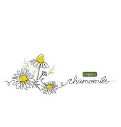 Chamomile meadow daisy camomile flowers vector