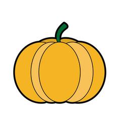 Pumpkin vegetable icon image vector