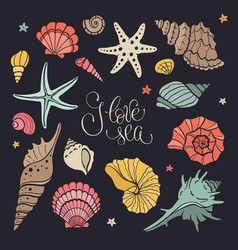 Sea shells collection vector