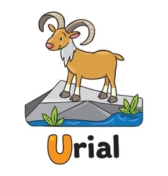 Little funny urial or ram for ABC Alphabet U vector image