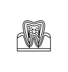 Tooth anatomy line icon vector