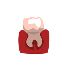 Tooth and gum on a white vector
