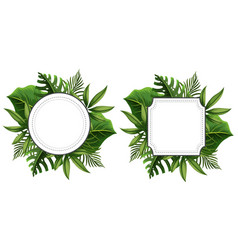 two frame template with green leaves vector image vector image