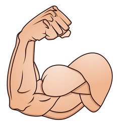 A strong arm showing its biceps muscle vector