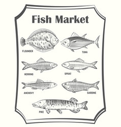 hand sketched different fish poster vector image