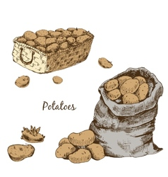 Potatoes vector