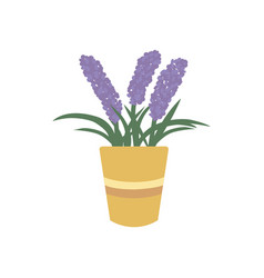 lavender in flower pot icon vector image