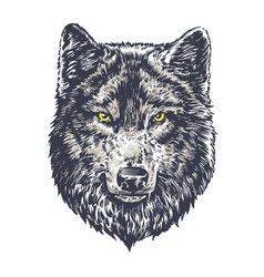 wolf dark on white background vector image vector image