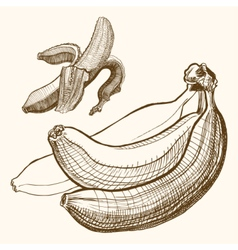 Bananas engraving drawing Fruit and food themes vector image
