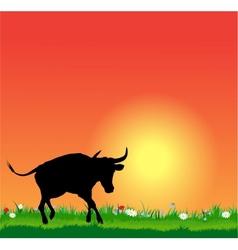 bull silhouette on sunset vector image