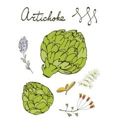 Colorful set of fresh hand drawn artichokes vector