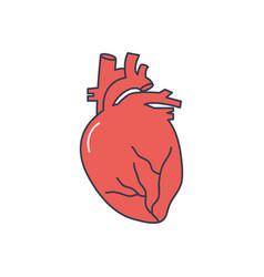 Human body concept anatomical heart icon line vector