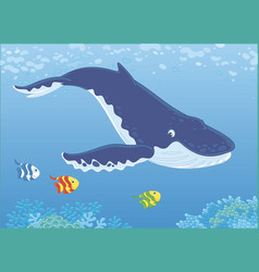 Hump-backed whale diving vector