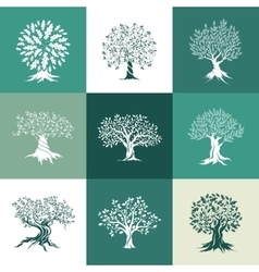 Olive and oak trees silhouette isolated on color vector