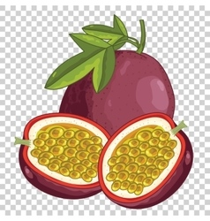 Passion Fruit Isolated vector image