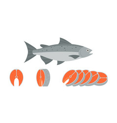 Salmon fish and sliced of salmon vector