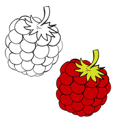 set raspberries painted with black lines and vector image