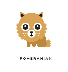 Adorable pomeranian spitz puppy with big fluffy vector