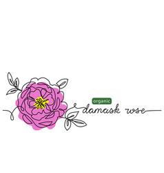 damask rose bulgarian flower vector image