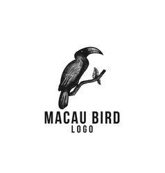 hand drawn parrot or macaw bird logo designs vector image