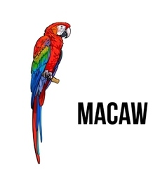 Hand drawn red green-winged macaw parrot vector image vector image