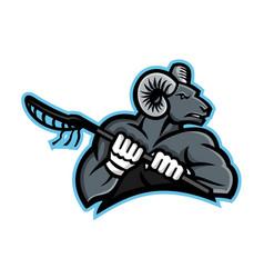 bighorn ram lacrosse mascot vector image