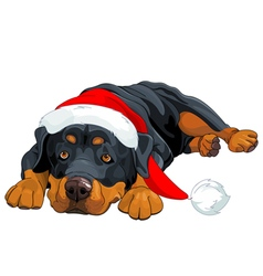 Christmas Rottweiler vector image